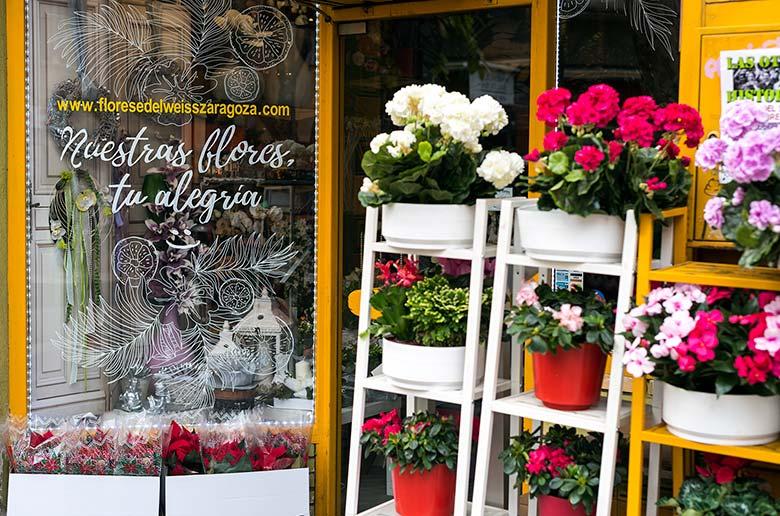Grabación de vídeo para Recreando Estudio en Zaragoza. Escaparate de Flores Edelweiis.